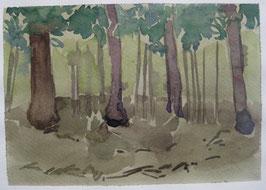 Fichtenwalde im Unterholz