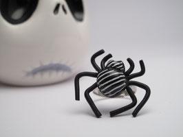 Araignée rayée