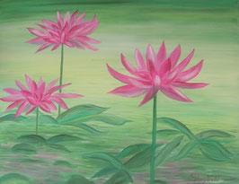 Les Fleurs de Nénuphar