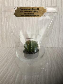 Kaktuskerze rund im Cognacglas