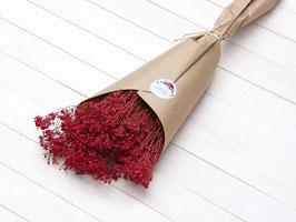 Broom Bloom v rdeči barvi
