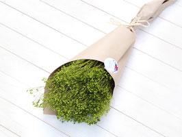 Broom Bloom v zeleni barvi