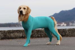 dog&cat body mit 4 Beinen Rüde (male)
