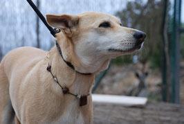 Hundekette Jaspis rot