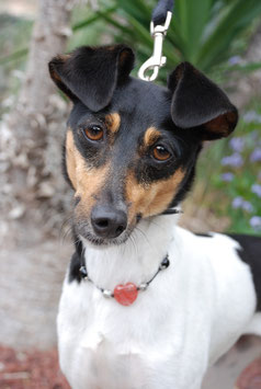 Hundekette Erdbeerquarz & Onyx