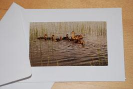 "Klapp-Foto-Postkarten ""Meer und mehr"""