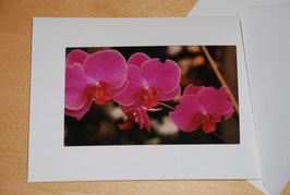 "Klapp-Foto-Postkarten ""Blumen II"""