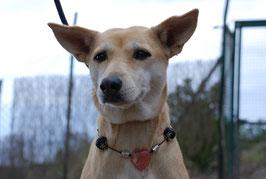 Hundekette Erdbeerquarz & Lava