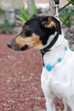 Hundekette Howlith - blau & silberfarben