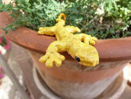 "Gecko ""Amarillo"""