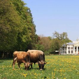 Draag bij en help zo mee om de akkers en weilanden van boerderij Eyckenstein om te toveren tot een bijenoase.