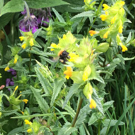 Geef vrienden, familie, geliefden een bloeiend cadeau in een bijenoase. Elk jaar zullen je bloemen bloeien en hun stuifmeel aan wilde bijen geven.