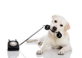 Telefonische/Email-Beratung