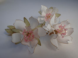 White Little Roses