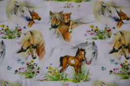 Pferde mit langer Mähne