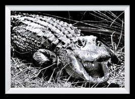 Smile, crocodile