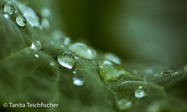 2_Wasserperlen / Foto Leinwände,duo