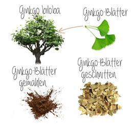 Ginkgoblätter Pulver