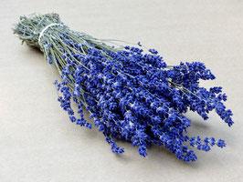 Lavendelbund