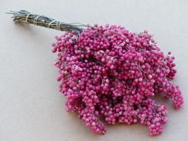Pfefferbeeren rosa