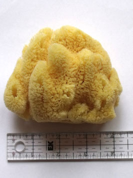 NATURAL ART SPONGE EXTRA LARGE