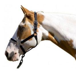 Blocker Kontrollhalfter Pony