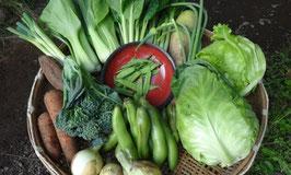 旬の野菜お試しAセット(1回)