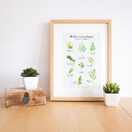 Poster 'Herbs'