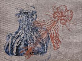 Grabado / Engraving XIV/XXV (Sistema nervioso)