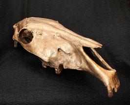 Cráneo caballo dorado / Golden horse skull