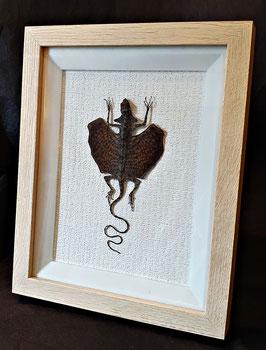 Squamata Draco Volans (M) : enmarcado / framed
