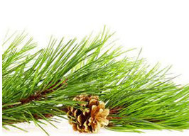 Chemical Guys Pine Fresh Scent