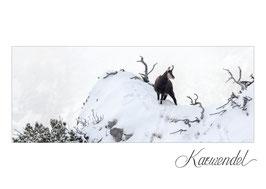 Postkarte KW_15