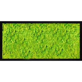 50x23 Tableau lichen stabilisé vert citron