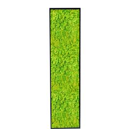 160x40 Tableau lichen stabilisé vert citron
