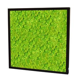 40x40 Tableau lichen stabilisé vert citron
