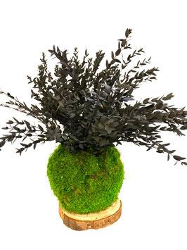 Kokedama Parvifolia stabilisé