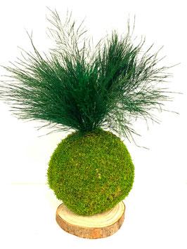 Kokedama Tree Fern stabilisé