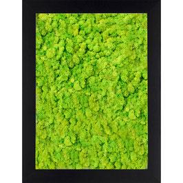 13x18 Tableau lichen stabilisé vert citron