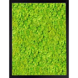30x40 Tableau en lichen stabilisé vert citron