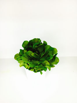 Composition stabilisée hortensia vert