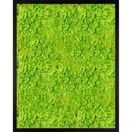40x50 Tableau lichen stabilisé vert citron