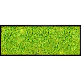 33x95 Tableau lichen stabilisé vert citron
