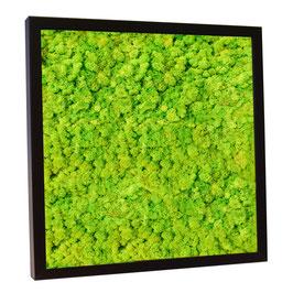 30x30 Tableau en lichen stabilisé vert citron