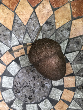 Eichel, kakaofarben -groß-