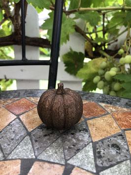 Mini-Kürbis -kakao-