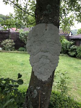 Baumgesicht -natur-