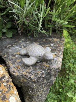 """Schildkröte """"Sam"""" -klein-"""