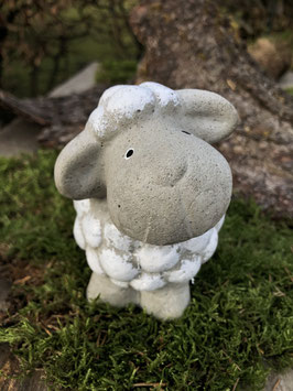 Großes Schaf