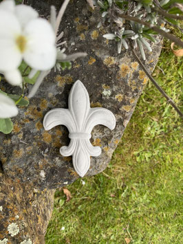 Kleine französische Lilie -natur-
